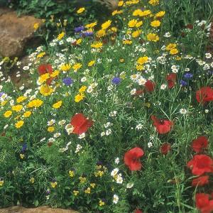 Mr Fothergill's Wildflower Cornfield Mixture (1g Seed)