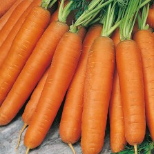Mr Fothergill's Carrot Nantes 5 Seeds (2000 Pack)