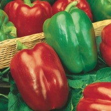 Mr Fothergill's Pepper (Sweet) Californian Wonder Seeds (150 Pack)