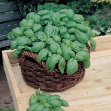 Mr Fothergill's Basil Sweet Seeds (650 Pack)