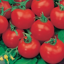 Mr Fothergill's Tomato (Standard) Shirley F1 Seeds