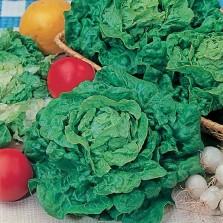 Mr Fothergill's Lettuce Tom Thumb (1500 Pack)