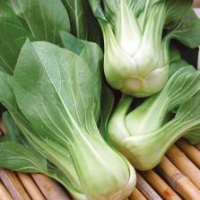 Mr Fothergill's Pak Choi Green Revolution F1 Seeds (175 Pack)