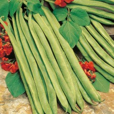 Mr Fothergill's Runner Bean Lady Di Seeds (45 Pack)