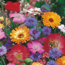Mr Fothergill's Mixed Annuals Seeds (200 Pack)