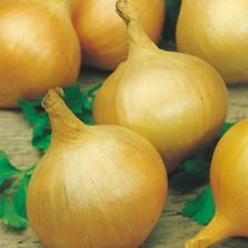 Mr Fothergill's Onion Bedfordshire Champion Seeds (350 Pack)
