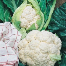 Mr Fothergill's Cauliflower All The Year Round Seeds (200 Pack)