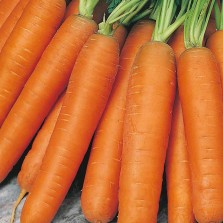 Mr Fothergill's Carrot Flyaway F1 Seeds (500 Pack)