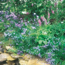 Mr Fothergill's Wildflower Woodland Mixture (1g Seed)