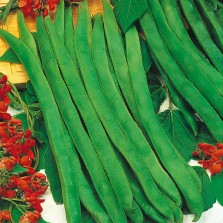 Mr Fothergill's Runner Bean Enorma Seeds (50 Pack)