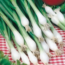 Mr Fothergill's Onion (Spring) White Lisbon Winter Hardy Seeds (650 Pack)