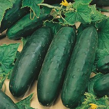 Mr Fothergill's Cucumber Marketmore Seeds (25 Pack)