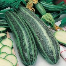 Mr Fothergill's Marrow Long Green Bush 2 Seeds (20 Pack)