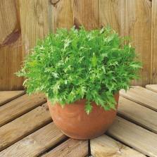 Mr Fothergill's Salad Leaves Mizuna Seeds (500 Pack)