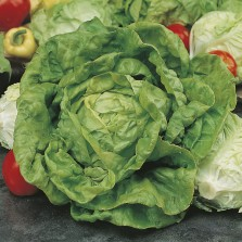 Mr Fothergill's Lettuce All The Year Round Seeds (1250 Pack)