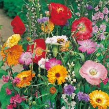 Mr Fothergill's Butterfly World Mixed Annuals Seeds