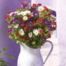 Mr Fothergill's Aster Palette Mixed Seeds (50 Pack)