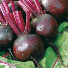 Mr Fothergill's Beetroot Moneta Seeds (150 Pack)