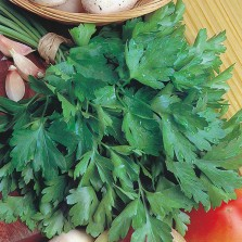 Mr Fothergill's Parsley Giant of Italy Seeds (750 Pack)