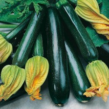 Mr Fothergill's Courgette Black Beauty Seeds (10 Pack)