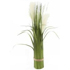 Pampas Grass 60cm