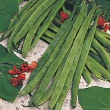 Mr Fothergill's Runner Bean Armstrong Seeds (45 Pack)