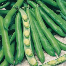 Mr Fothergill's Broad Bean Bunyards Exhibition Seeds (50 Pack)