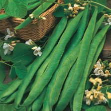 Mr Fothergill's Runner Bean Mergoles Seeds (45 Pack)