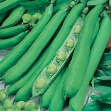 Mr Fothergill's Broad Bean Masterpiece Green Longpod Seeds (45 Pack)