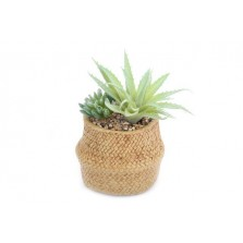 Succulents In Woven Pot
