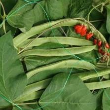 Pea & Bean Netting 150mm (2 x 5m) Green