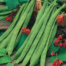 Mr Fothergill's Runner Bean Polestar Seeds (50 Pack)