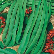 Mr Fothergill's Runner Bean Scarlet Emperor Seeds (50 Pack)
