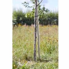 Round Tree Stake 1.5m x 35mm
