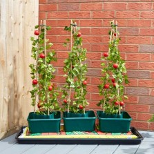 Tomato Gro-Box - Triple pack