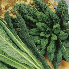 Mr Fothergill's Kale Nero di Toscana Seeds (400 Pack)