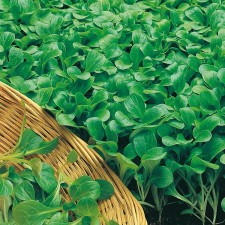 Mr Fothergill's Seed Collection Salad Leaves Easy