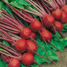 Mr Fothergill's Beetroot Detroit 2 - Crimson Globe Seeds (275 Pack)