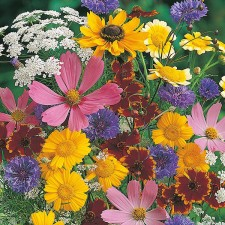 Mr Fothergill's Mixed Wildlife Attracting Annuals Seeds
