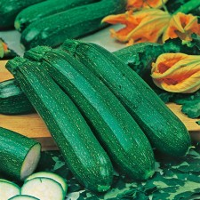 Mr Fothergill's Courgette All Green Bush Seeds (20 Pack)