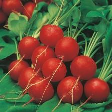 Mr Fothergill's Radish Scarlet Globe Seeds (1000 Pack)