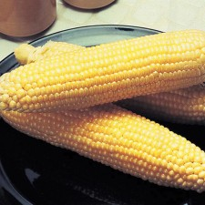 Mr Fothergill's Sweet Corn Incredible F1 Seeds (50 Pack)