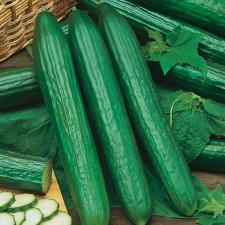 Mr Fothergill's Cucumber Telegraph Improved Seeds (10 Pack)