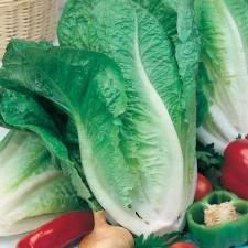 Mr Fothergill's Lettuce Lobjoits Green Cos Seeds (1250 Pack)