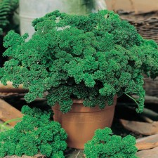 Mr Fothergill's Parsley Moss Curled 2 Seeds (1000 Pack)
