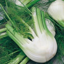 Mr Fothergill's Fennel di Firenze Seeds (250 Pack)