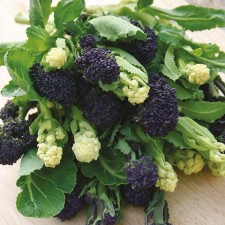 Mr Fothergill's Broccoli (Sprouting) Lancer Mixed Seeds (150 Pack)
