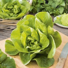 Mr Fothergill's Lettuce Gustav's Salad Seeds (1000 Pack)