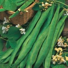 Mr Fothergill's Runner Bean Mergoles Seeds (45 Pack)