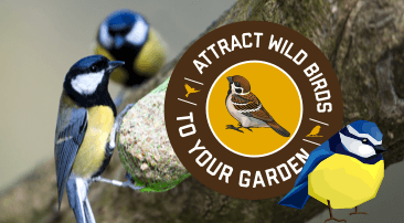 How to attract wild birds to your garden: top tips